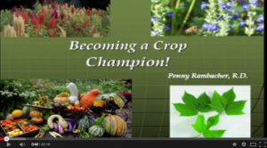 Becoming a Crop Champion - Chaya